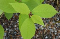 Grön växt 10 BK