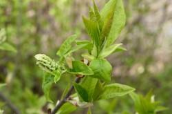Grön växt 2 BK