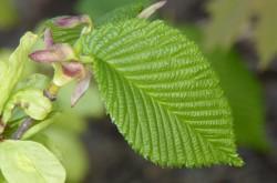 Grön växt 4 BK