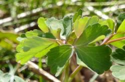 Grön växt 7 BK