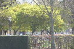 Park och gata 134 BK